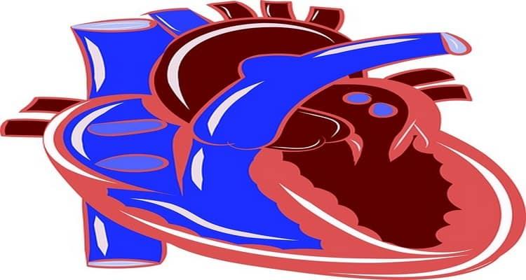 la malbouffe maladiecardio