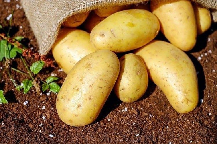 pommes de terre pour faire la galette
