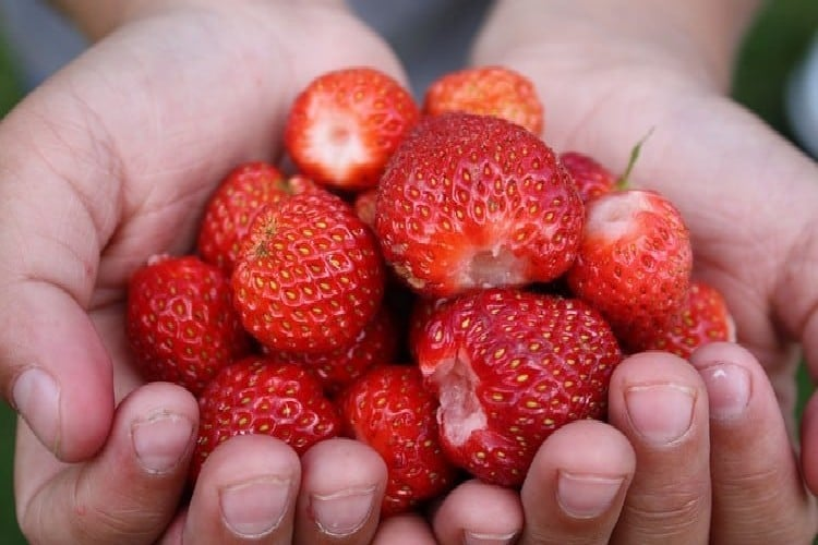 Rhum arrangé fraise - Rhum Charrette à la fraise dans top 5