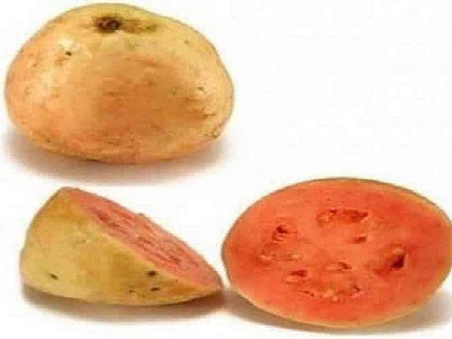 rhum arrangé goyave fruit