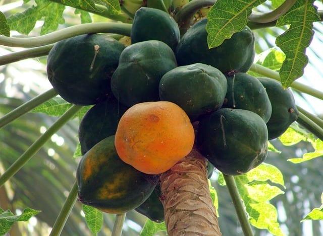 Rhum Arrangé Papaye Mûre