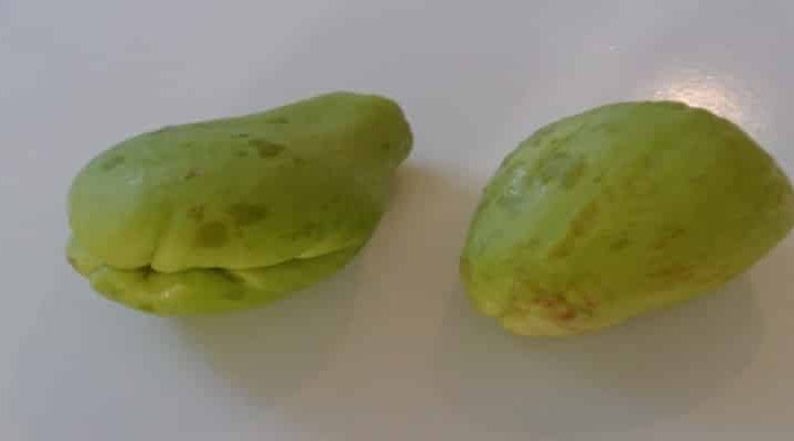Daub darling (chayote) in Reunion or Mauritius