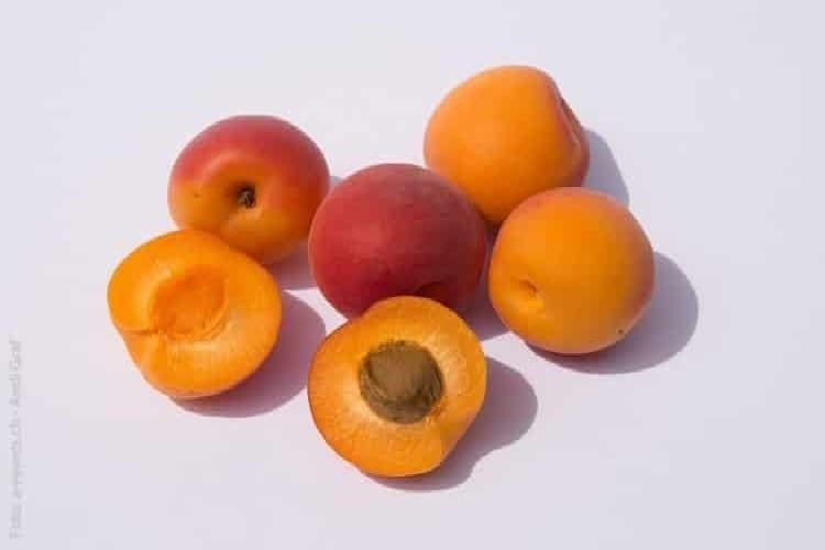tarte aux abricots le fruit