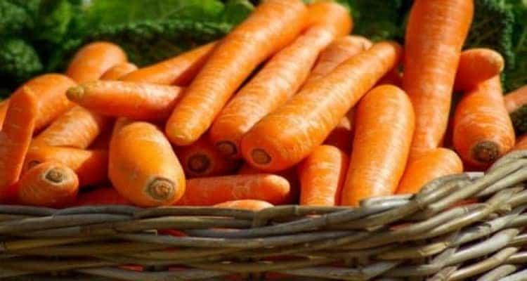 cassauriz carottes