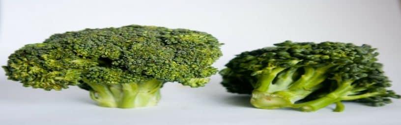 gratin brocoli plante