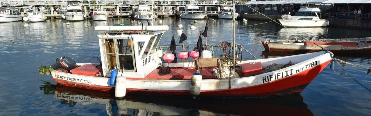 parmentier de cabillaud bateau