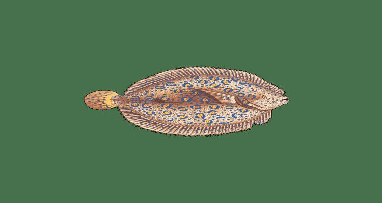 sole meunière poisson