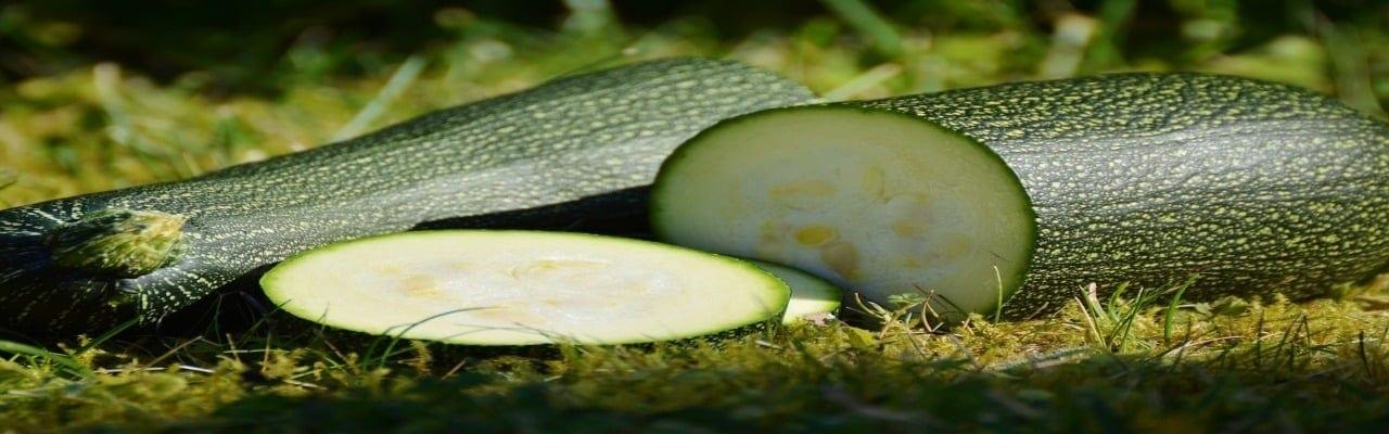 lasagne thon courgette