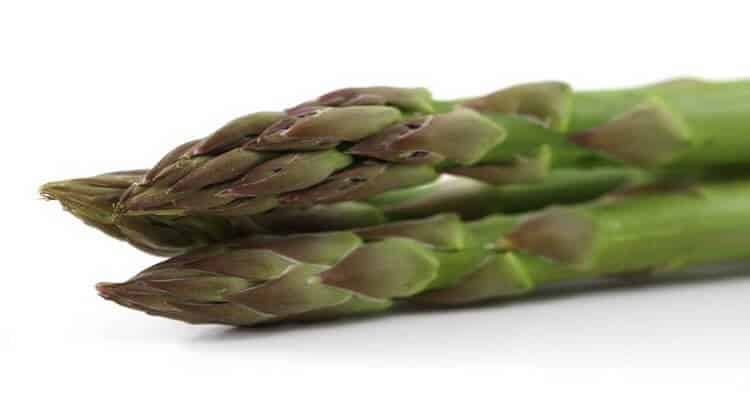 Asperges de jardin - Légume