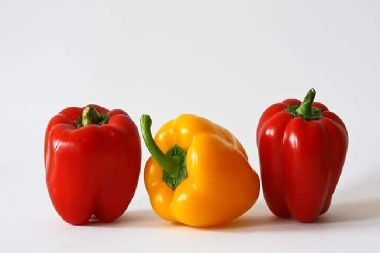Terrine de courgettes au coulis de poivrons rouges sucré. https://edithetsacuisine.fr/wp-content/uploads/2016/11/terrine-de-courgettes-coulis-poivron-rouge-legumes-1.jpg