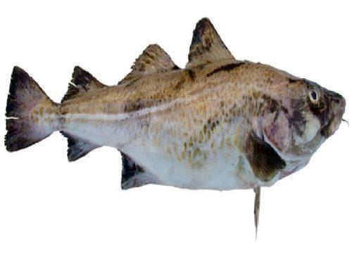 Le poisson comme nourriture - Code
