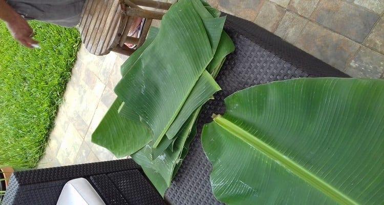laver et chauffer les feuilles de bananier