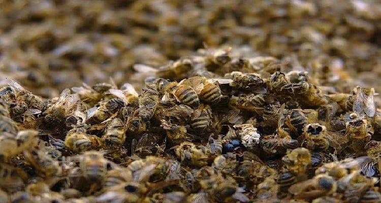 les pesticides provoquent la mort des insectes