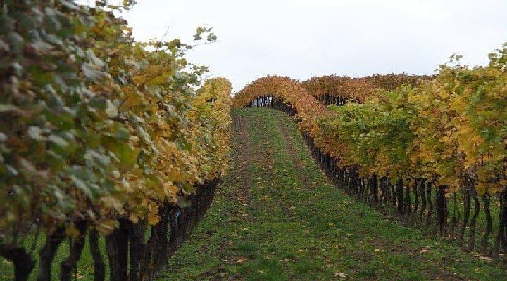 Vin biodynamique et vin biologique : quelle est la différence