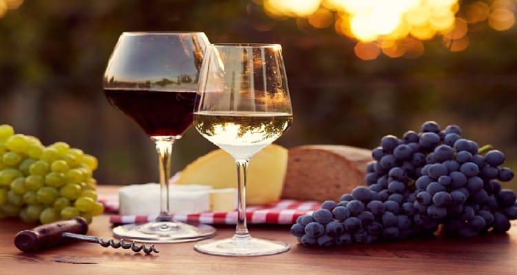 vin biologique vin biodynamique raisin noir