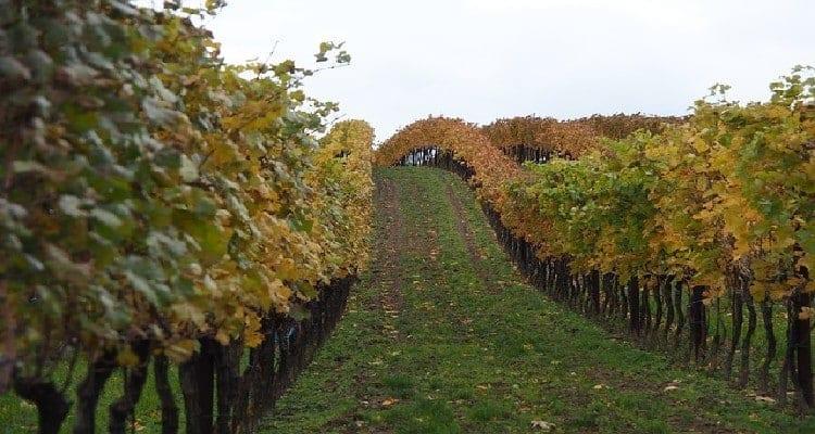 vin biologique vin biodynamique