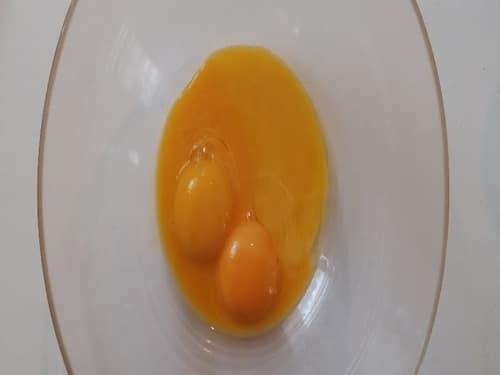 Jaune d'œuf - Œuf