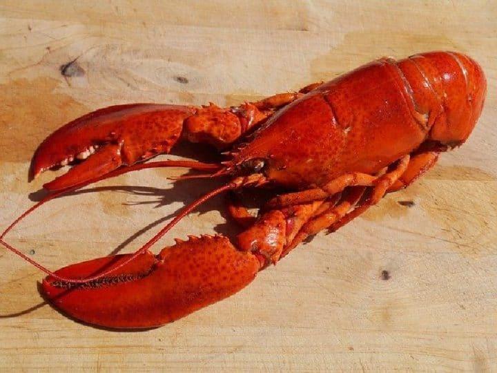 les Bahamas et le homard